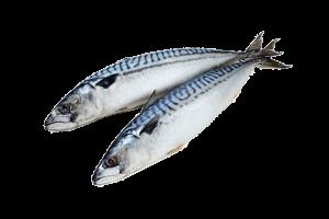 скумбрия свежемороженая купить оптом, скумбрия рыба
