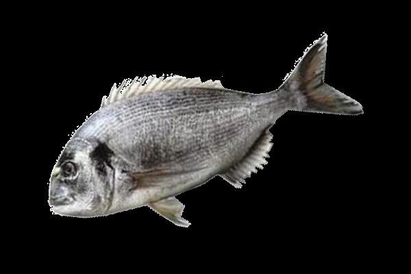 дорадо свежемороженая купить оптом, дорадо рыба