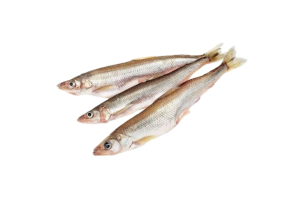 корюшка свежемороженая купить оптом, рыба корюшка