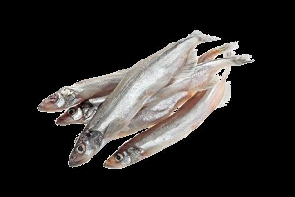 Мойва свежемороженая купить оптом, рыба мойва