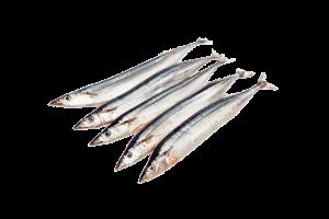 сайра свежемороженая купить оптом, рыба сайра