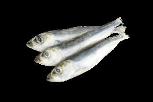 Салака свежемороженая купить оптом, рыба салака