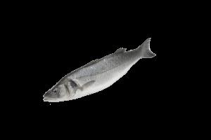 сибас свежемороженый купить оптом, рыба сибас