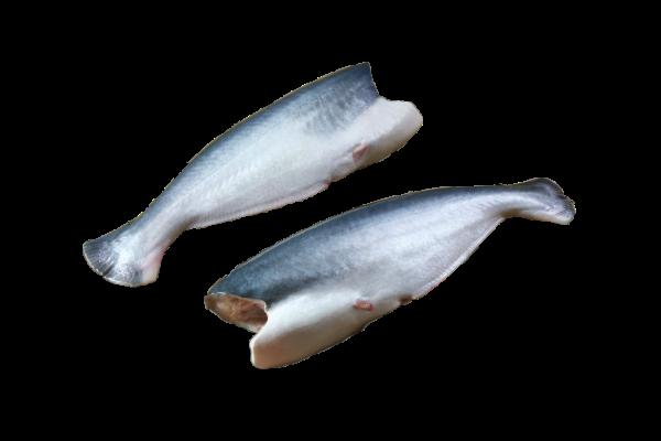 тушка пангасиуса купить оптом, рыба пангасиус